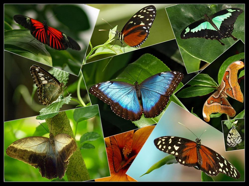 Вольер бабочек