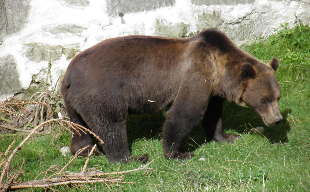 Берн. Символ города медведь