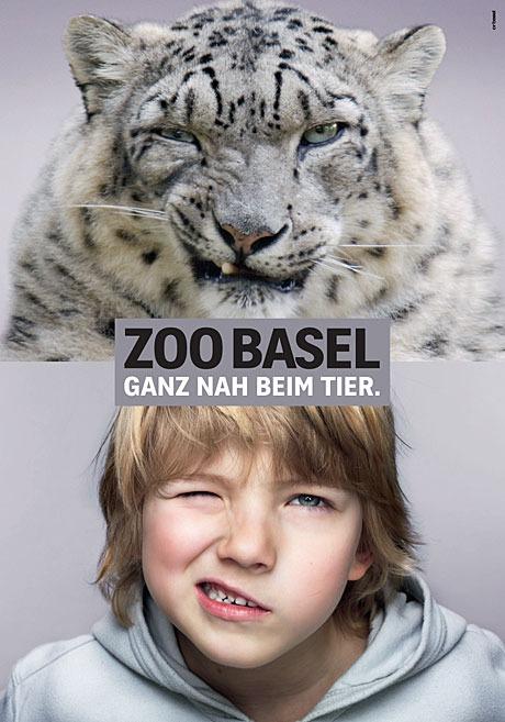 Зоопарк Базель. Снежный барс. Шутка